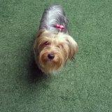 Adestrador Profissional de Cães
