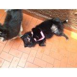 Adestradores Canino na Vila Indiana