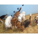 Adestradores Canino preço no Parque Novo Oratório