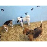 Adestradores Canino valor na Santa Paula