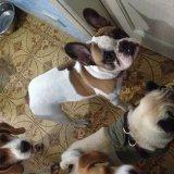 Adestradores Canino valores na Chácara Klabin