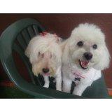 Adestradores de Cachorros no Jardim Lutfala