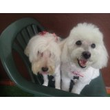 Adestradores de Cachorros no Parque Marajoara I e II