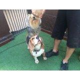 Adestradores de Cães  no Parque Erasmo Assunção
