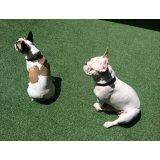 Adestradores de Cães onde encontrar no Campanário