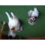 Adestradores de Cães onde encontro no Jaguaré