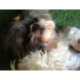Adestradores de Cães quero contratar no Jardim Ademar