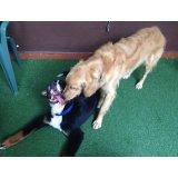 Adestradores de Cães valor na Vila América