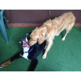 Adestradores de Cães valor no Inamar