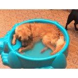 Adestradores de Cães