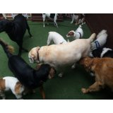 Adestradores Profissionais de Cachorro na Vila Príncipe de Gales