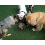 Adestradores Profissionais para Cachorro contratar na Chácara Monte Alegre