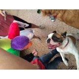 Adestradores Profissionais para Cachorro preço no Jardim Cotching