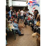 Adestradores Profissionais para Cachorro preços no Parque Vila Maria