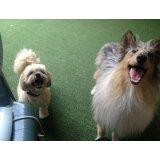 Adestradores Profissionais para Cachorro valores no Jardim Ana Maria