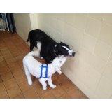 Adestramento de Cachorro na Água Branca