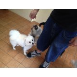 Adestramento de Cachorro preços no Jardim Santo Amaro