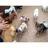 Adestramento de Cachorro quanto custa em média no Jardim das Rosas