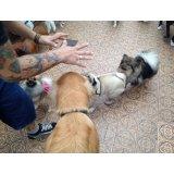 Adestramento de Cachorros na Cidade Universitária