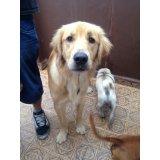 Adestramento de Cães com valor baixo no Jardim Santa Cristina