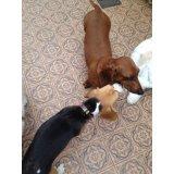 Adestramento de Cães com valor bom no Jardim Cristiane