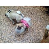 Adestramento de Cães contratar em Cerqueira César