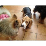 Adestramento de Cães no Bairro Campestre