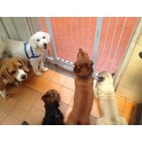 Adestramento de Cães no Bairro Jardim