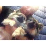 Adestramento de Cães no Sítio da Figueira