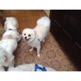 Adestramento de Cães onde contratar na Vila Camilópolis