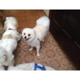 Adestramento de Cães onde contratar no Parque Gerassi