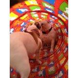 Adestramento de Cães onde tem no Jardim Carla