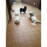 Adestramento de Cães preço no Bairro Campestre