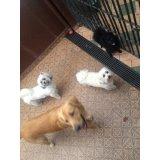 Adestramento de Cães preços no Jardim Scaff