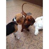 Adestramento de Cães quanto custa em média no Jardim Ana Maria