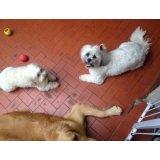 Adestramento de Cães valor no Jardim Maria Emília