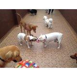 Adestramento de Cães valores no Parque Continental