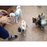 Adestramentos de Cachorro na Ponte Pequena