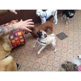 Adestramentos de Cachorro preço na Santa Cecília