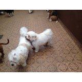 Adestramentos de Cachorro quanto custa em média na Chácara Monte Alegre
