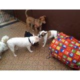 Adestramentos de Cachorro quanto custa na Chácara Lane