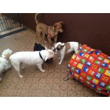 Adestramentos de Cachorro quanto custa no Sítio Boa Vista