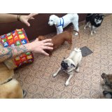 Adestramentos de Cachorro valor no Jardim Clélia