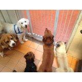 Adestramentos de Cachorro valores na Vila Ernesto