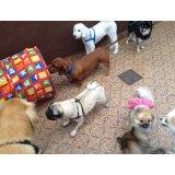Adestramentos de Cachorros na Vila Invernada