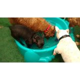 Babá de Cachorro preço no Jardim Flórida