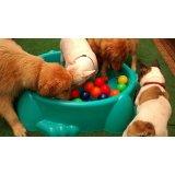 Babá de Cachorros no Jardim Bela Vista