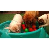 Babá de Cachorros preços na Água Branca