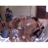 Babá de Cachorros quanto custa em média na Vila Lucinda
