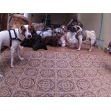 Babá de Cachorros valor na Vila Campos Sales